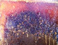 Le miel jaune Image libre de droits