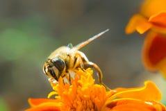 Le miel, mettent le `t oublient des fleurs Photo libre de droits