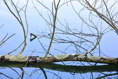 Le miroir comme l'eau reflète des arbres à un parc Photos stock