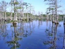 Le Mississippi bayou en avril 2003 noir Photo libre de droits