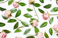 Le modèle, composition des feuilles de vert et fleurs roses Images stock