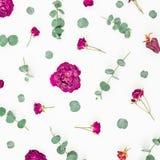 Le modèle de fleurs des roses et de l'eucalyptus s'embranche sur le fond blanc Configuration plate, vue supérieure Image libre de droits