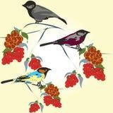 Le modèle de l'oiseau Photographie stock libre de droits