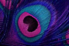 Le modèle de la queue d'un paon illustration de vecteur
