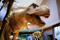 Le modèle de rex de tyrannosaure dans le musée de nature de Changhaï Image stock