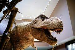 Le modèle de rex de tyrannosaure dans le musée de nature de Changhaï Image libre de droits