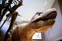 Le modèle de rex de tyrannosaure dans le musée de nature de Changhaï Photographie stock libre de droits