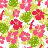 Le modèle des feuilles et de la ketmie tropicales de fleurs fleurissent Images libres de droits