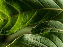 Le modèle des feuilles vertes Photos libres de droits