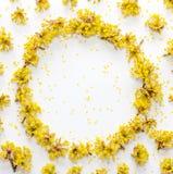Le modèle floral avec le jaune fleurit le cornouiller avec l'espace vide pour le texte sur a sur le fond blanc Image stock