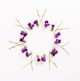 Le modèle floral d'une petite forêt parfumée fleurit des violettes avec l'espace pour le texte sur un fond blanc Photographie stock