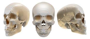 Le modèle humain de crâne est posé Images stock