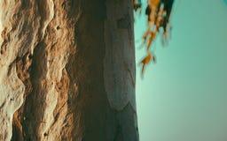 Le modèle refoule l'eucalyptus Image stock