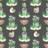 Le modèle sans couture avec des oeufs d'oiseau de Pâques d'aquarelle, nids, crocus fleurit dans les pots et les oiseaux mignons Photo libre de droits