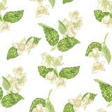 Le modèle sans couture avec le jasmin fleurit dans le vecto graphique réaliste illustration libre de droits