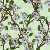 Le modèle sans couture avec la diagonale fleurissante de pommier s'embranche illustration stock