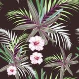 Le modèle sans couture avec les paumes et la ketmie tropicales exotiques fleurit Plantes tropicales roses sur le fond foncé Tapot illustration stock