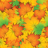Le modèle sans couture de l'érable lumineux d'automne part - dirigez l'illustration Photographie stock