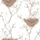 Le modèle sans couture de l'oiseau d'aquarelle niche sur les branches d'arbre, tirées par la main sur un fond blanc Images libres de droits