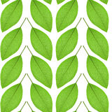 Le modèle sans couture du vert part sur un fond blanc Photographie stock