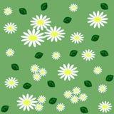 Le modèle sans couture floral avec des camomilles, et le vert part sur le lig Images stock