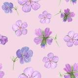 Le modèle sans couture floral d'aquarelle avec le géranium de forêt fleurit sur le fond blanc illustration libre de droits