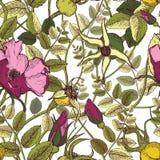 Le modèle sans couture graphique tiré par la main du chien de couleur a monté des fleurs, des baies et feuillage un fond blanc illustration de vecteur