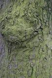 Le modèle sur la surface d'arbre Photographie stock