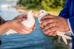 le mogli e la sposa stanno tenendo i piccioni bianchi fotografia stock libera da diritti