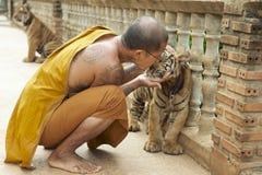 Le moine bouddhiste embrasse le tigre de bébé indo-chinois dans Saiyok, Thaïlande Photo libre de droits