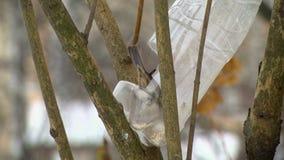 Le moineau mangent d'une cuvette d'alimentation en plastique banque de vidéos