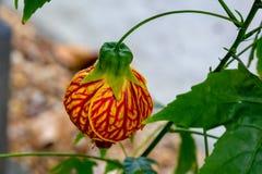 Le monde chinois AZ de papillon de Coconut Creek de lanterne image stock