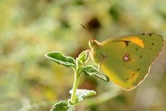 Le monde coloré des insectes Images stock