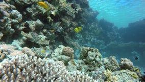 Le monde sous l'eau L'eau claire banque de vidéos
