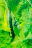 Le monde sous-marin Pattaya est une présentation d'attraction de loisirs Images stock