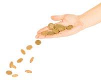 Le monete cadono dalle mani su un mucchio delle monete di oro Fotografia Stock