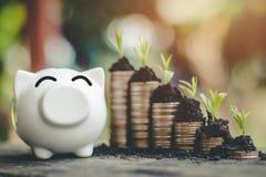 Le monete del porcellino salvadanaio con soldi impilano i soldi di risparmio della crescita di punto fotografie stock