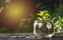 Le monete mettono in vetro ed impilano le monete per l'affare e la tassa crescenti Fotografia Stock