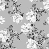 Le monochrome fleurit Apple Modèle sans couture d'aquarelle d'ouvrage sur Gray Background Image libre de droits
