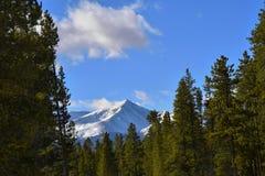 Le mont Elbert dans les arbres Photographie stock libre de droits
