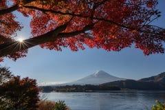 Le mont Fuji avec un arbre d'érable rouge dans le premier plan photographie stock libre de droits