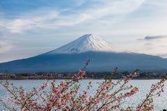 Le mont Fuji gentil et beau et fleurs de cerisier roses au printemps photographie stock