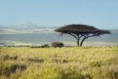 Le mont Kenya et arbre solitaire d'acacia à la garde de Lewa, Kenya, Afrique image libre de droits
