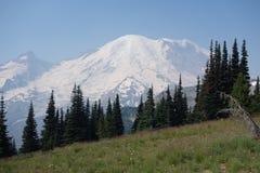 Le mont Rainier avec les arbres et le pré Photo libre de droits