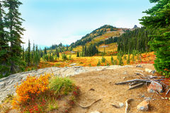 Le mont Rainier, Washington Traînée de paradis Images libres de droits
