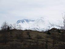 Le Mont Saint Helens par la forêt Photos stock