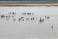 Group of hikers in the bay at low tide. Hike in the bay with a knowledgeable guide. Mont Saint-Michel , Normandy,. Le Mont-Saint-Michel, France - September 13 stock image