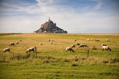 Le Mont-Saint-Michel and sheeps Stock Photos