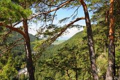 Le montagne abbelliscono con la foresta e l'albero verdi in priorità alta, fondo Cielo blu sopra terra Immagini Stock