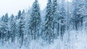 Le montagne dell'inverno abbelliscono con gli alti abeti rossi e neve stock footage
